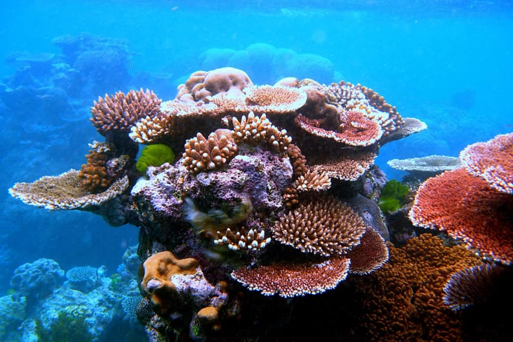 Florida Keys on the Cheap